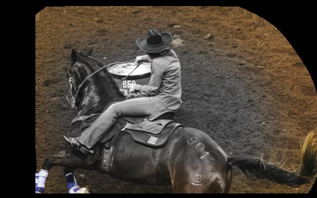 Montgomery Barrel Horses